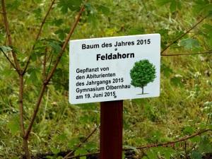 Feldahorn_19.06.2015
