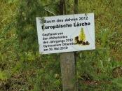 Lärche_2012