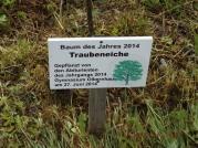 Traubeneiche_2014 (2)